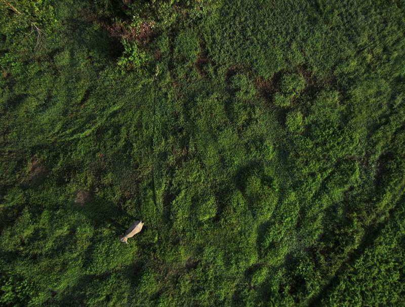 Drone Conservation Photography