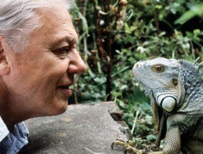 David Attenborough BBC