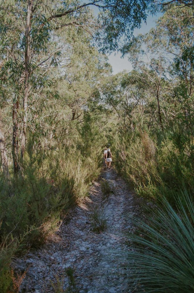 Forest bathing meditation with Andy Summons